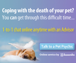 Psychic Pet Readings 3 Free Minutes!